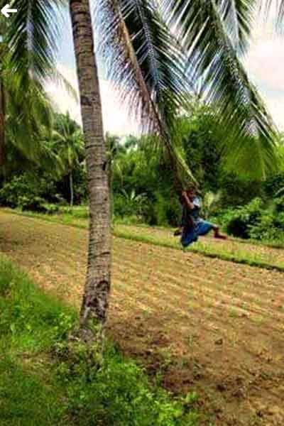 "alt=""Filipino childhood memories boy swinging on the tree"""