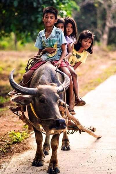 "alt=""Filipino kids in probinsya love to ride the carabao"""